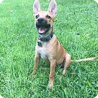 Adopt A Pet :: Eden (fostered in San Antonio) - Cranston, RI