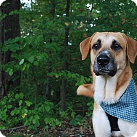 Adopt A Pet :: Clifford - New Castle, PA
