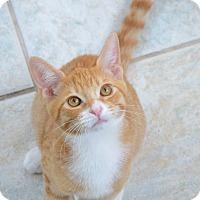 Domestic Shorthair Kitten for adoption in Van Nuys, California - Nemo