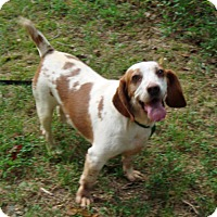 Adopt A Pet :: Emma - Dumfries, VA