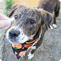 Adopt A Pet :: Jess Mariano - Jersey City, NJ