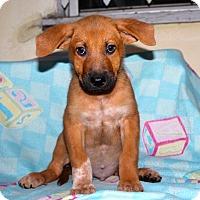 Adopt A Pet :: Squidge - Los Angeles, CA