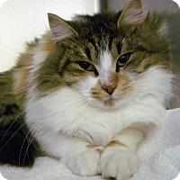 Adopt A Pet :: clarice - Muskegon, MI