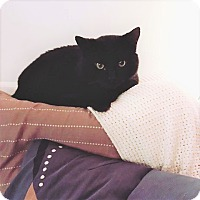 Adopt A Pet :: Loden - Vancouver, BC