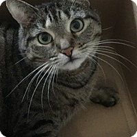Adopt A Pet :: Serena - Fairfield, CT