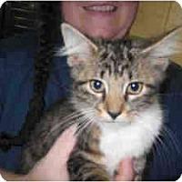 Adopt A Pet :: Sherlock - Arlington, VA