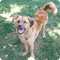 Adopt A Pet :: Oscar - Manhasset, NY