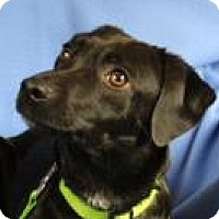 Adopt A Pet :: Macy - Minneapolis, MN