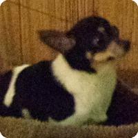 Adopt A Pet :: kayla - Crump, TN