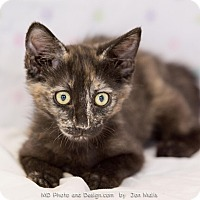 Adopt A Pet :: Julia - Fountain Hills, AZ