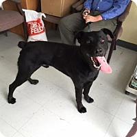 Adopt A Pet :: Brady - Erwin, TN