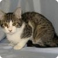 Adopt A Pet :: Garbo - Powell, OH