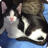 Adopt A Pet :: Oreo - Horsham, PA