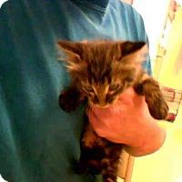 Adopt A Pet :: NICHOLAS - Conroe, TX