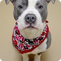 Adopt A Pet :: Jersey - Dublin, CA