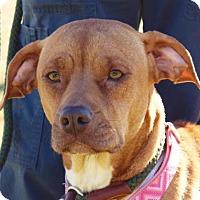 Adopt A Pet :: Jenna - Berkeley Heights, NJ