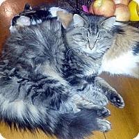 Adopt A Pet :: Billy - Germantown, MD