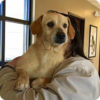 Adopt A Pet :: David - Alpharetta, GA