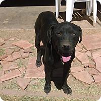Adopt A Pet :: Jada - Phoenix, AZ