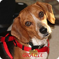 Adopt A Pet :: GRACIE - Ventnor City, NJ
