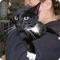 Adopt A Pet :: Mochi - Brooklyn, NY