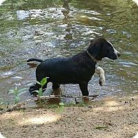 Adopt A Pet :: Pandora - Adopted! - Ascutney, VT