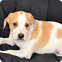 Adopt A Pet :: Gibbs - Albemarle, NC