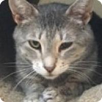 Adopt A Pet :: Addie - McHenry, IL