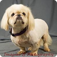 Adopt A Pet :: Angel - Oklahoma City, OK