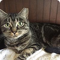 Adopt A Pet :: Sheba - Worcester, MA