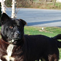 Adopt A Pet :: Olive - Columbia, PA