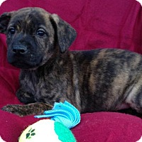 Adopt A Pet :: Reed - Louisville, KY