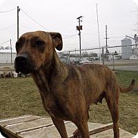 Adopt A Pet :: Nakota - Van Wert, OH