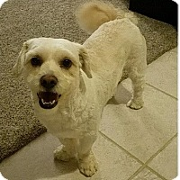 Adopt A Pet :: Ty - Mary Esther, FL