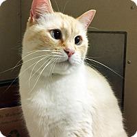 Adopt A Pet :: Truman - Oakland, CA