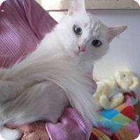 Adopt A Pet :: Lumi - Davis, CA