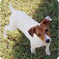 Adopt A Pet :: BOBBY - Phoenix, AZ
