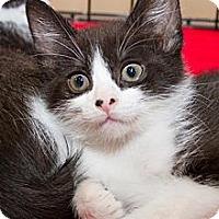 Adopt A Pet :: Eddie - Irvine, CA