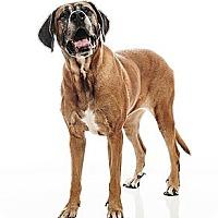Adopt A Pet :: Teddi - Broomfield, CO