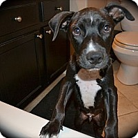 Adopt A Pet :: George-Adoption Pending - Phoenix, AZ