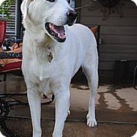 Adopt A Pet :: Nana - Richmond, VA