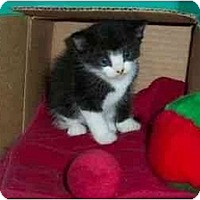Adopt A Pet :: Violet - Secaucus, NJ