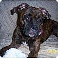 Adopt A Pet :: Madeline - Thomasville, GA