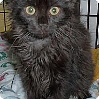 Adopt A Pet :: Gisele - Colmar, PA