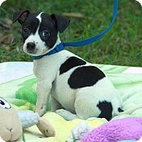 Adopt A Pet :: Curly - Staunton, VA