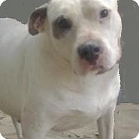 Adopt A Pet :: Lady - St Simons, GA