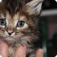 Adopt A Pet :: Harmony Rose - Union, KY