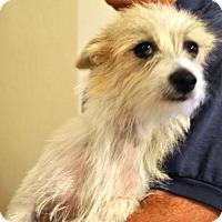 Adopt A Pet :: Charlize - Phoenix, AZ