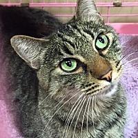 Adopt A Pet :: Bogart - Napa, CA