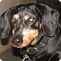 Adopt A Pet :: Tucker - Foster Care - Oxford, MS